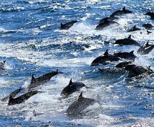 fuga_delfini