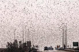 Serbia invasa dagli insetti