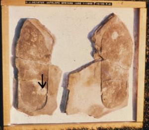 Impronte misteriose