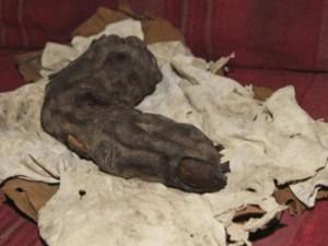 Egitto: Trovato il dito di un gigante