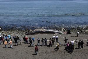 balena-morte