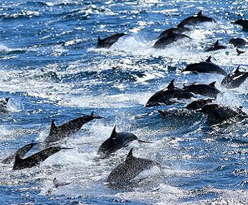 Delfini in fuga